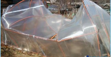 Kasvihuone polykarbonaatista käsillään