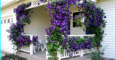 Havupuut for Gardens: Garden Design havupuiden