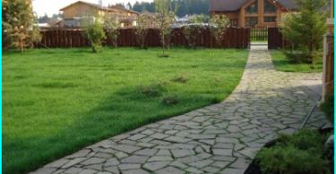 Miten tehdä oma käsin Topiary: askel askeleelta ohjeet töihin