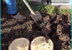 Tyypit kuusen: paras koriste lajikkeiden kasvaa puutarhassa